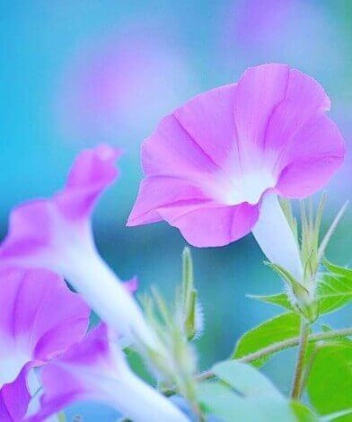 عکس پروفایل عاشقانه گل جدید
