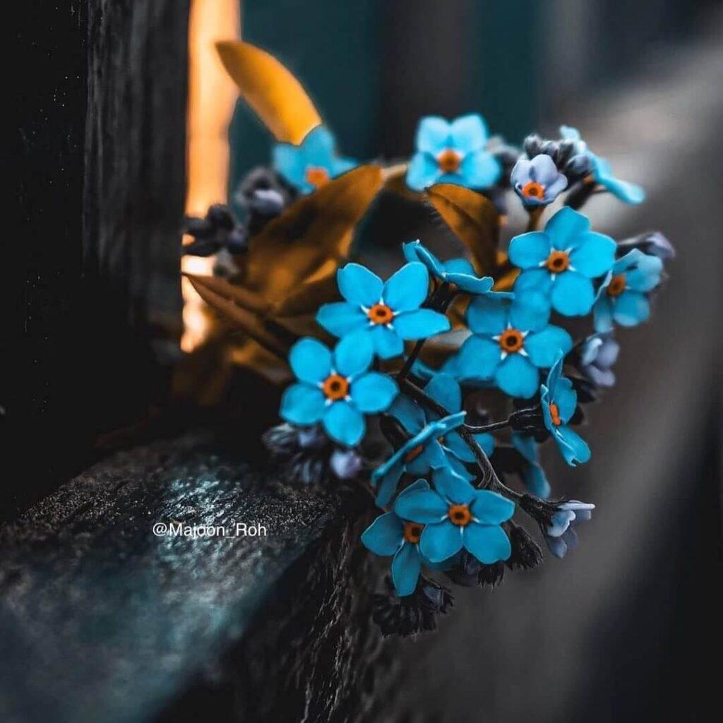 عکس پروفایل گل آبی