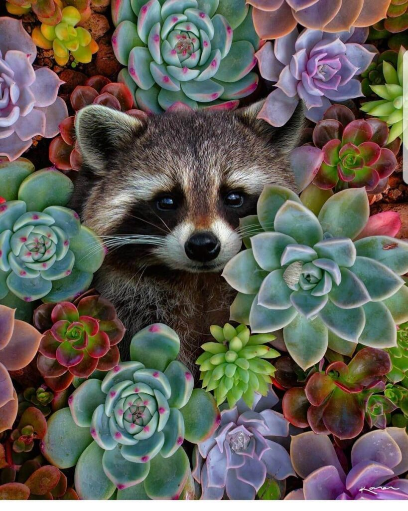 عکس پروفایل گل