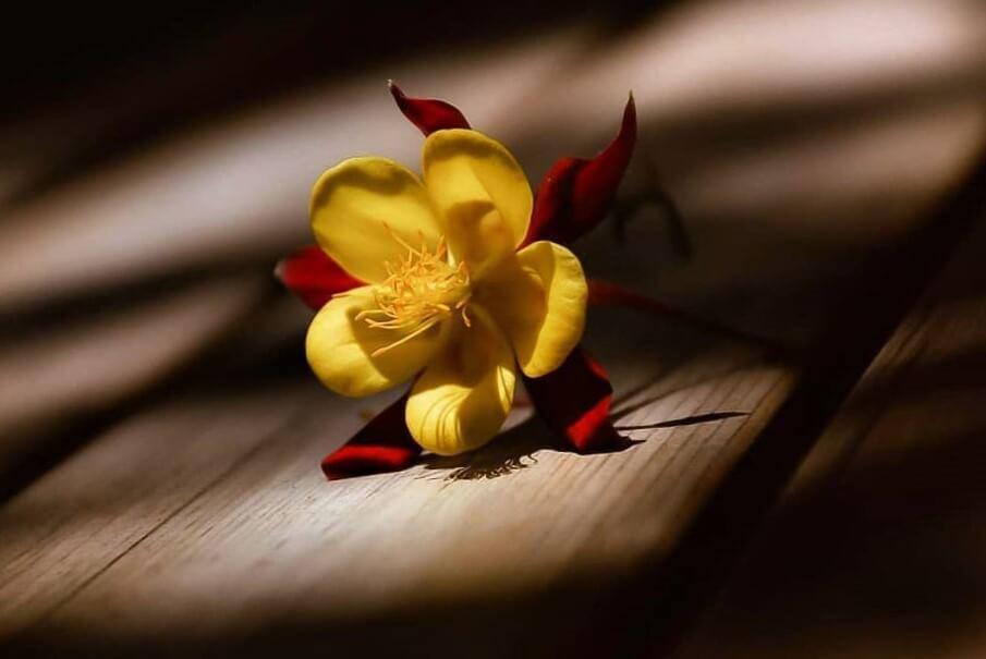 عکس پروفایل گل زرد