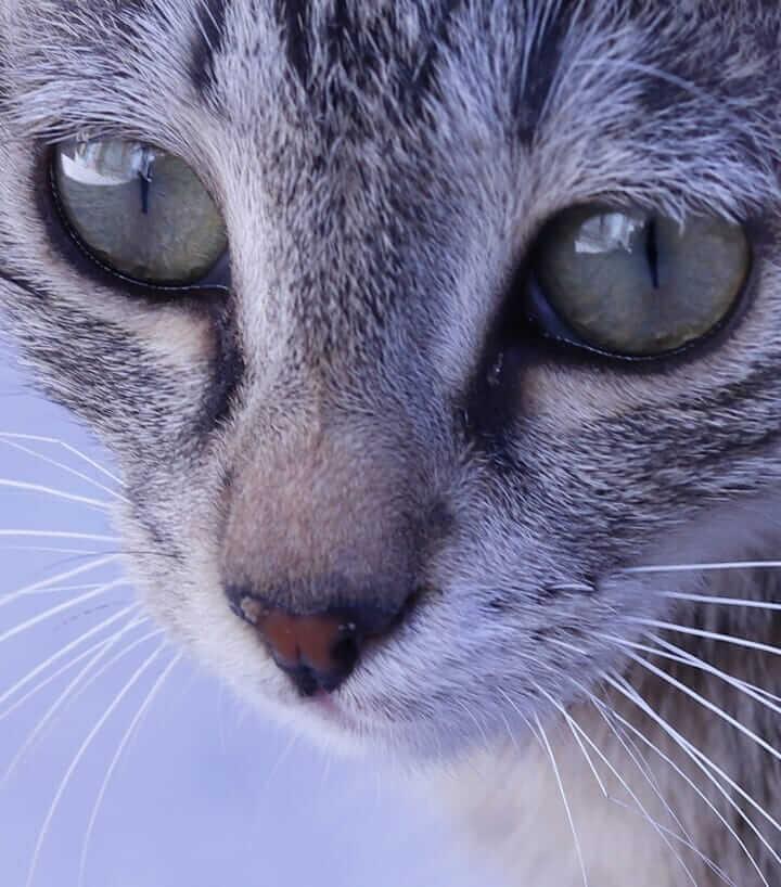 عکس گربه بامزه و جذاب