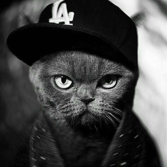 عکس گربه لاتری