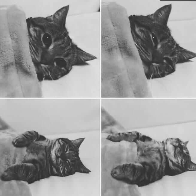 عکس گربه با حال