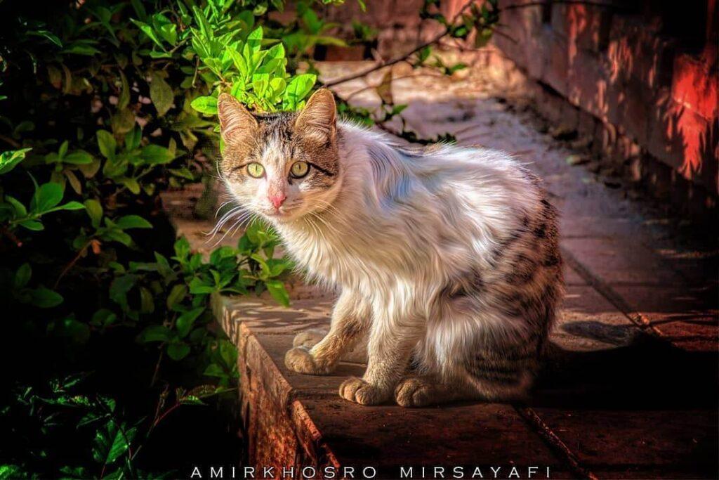 عکس پروفایل گربه بامزه و جذاب