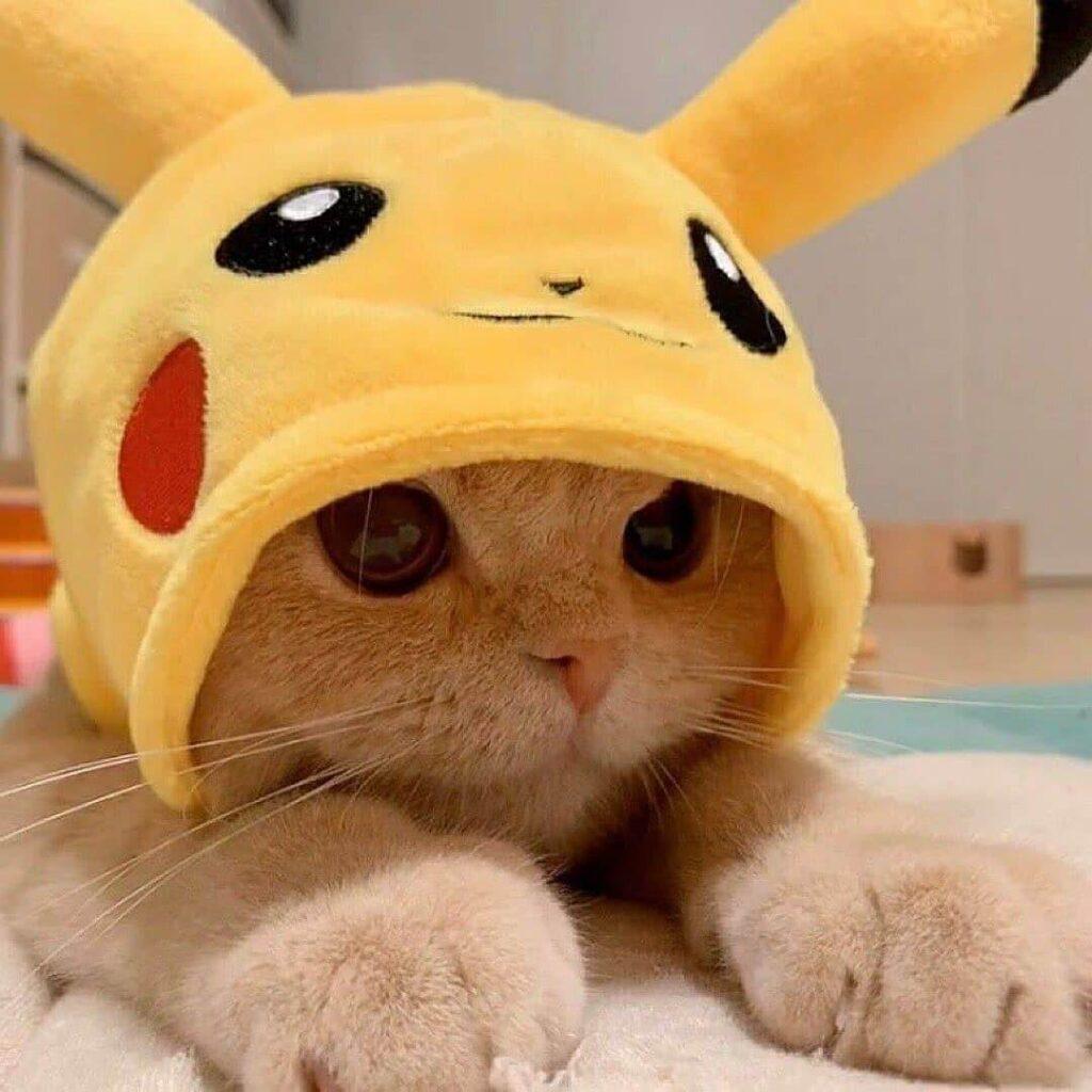 عکس پروفایل گربه بازمره