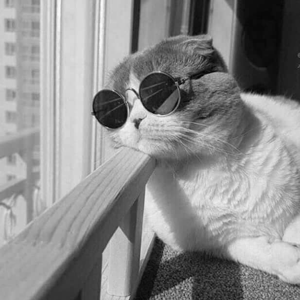 عکس پروفایل گربه لاکچری