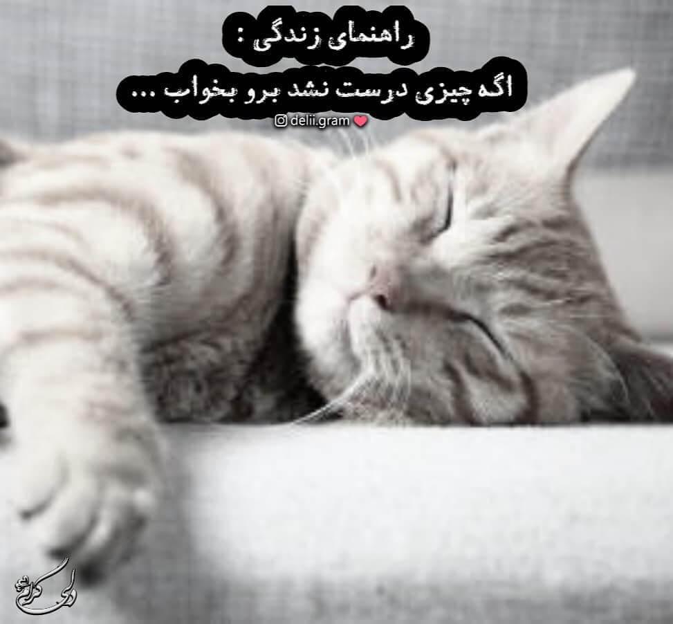 عکس نوشته گربه