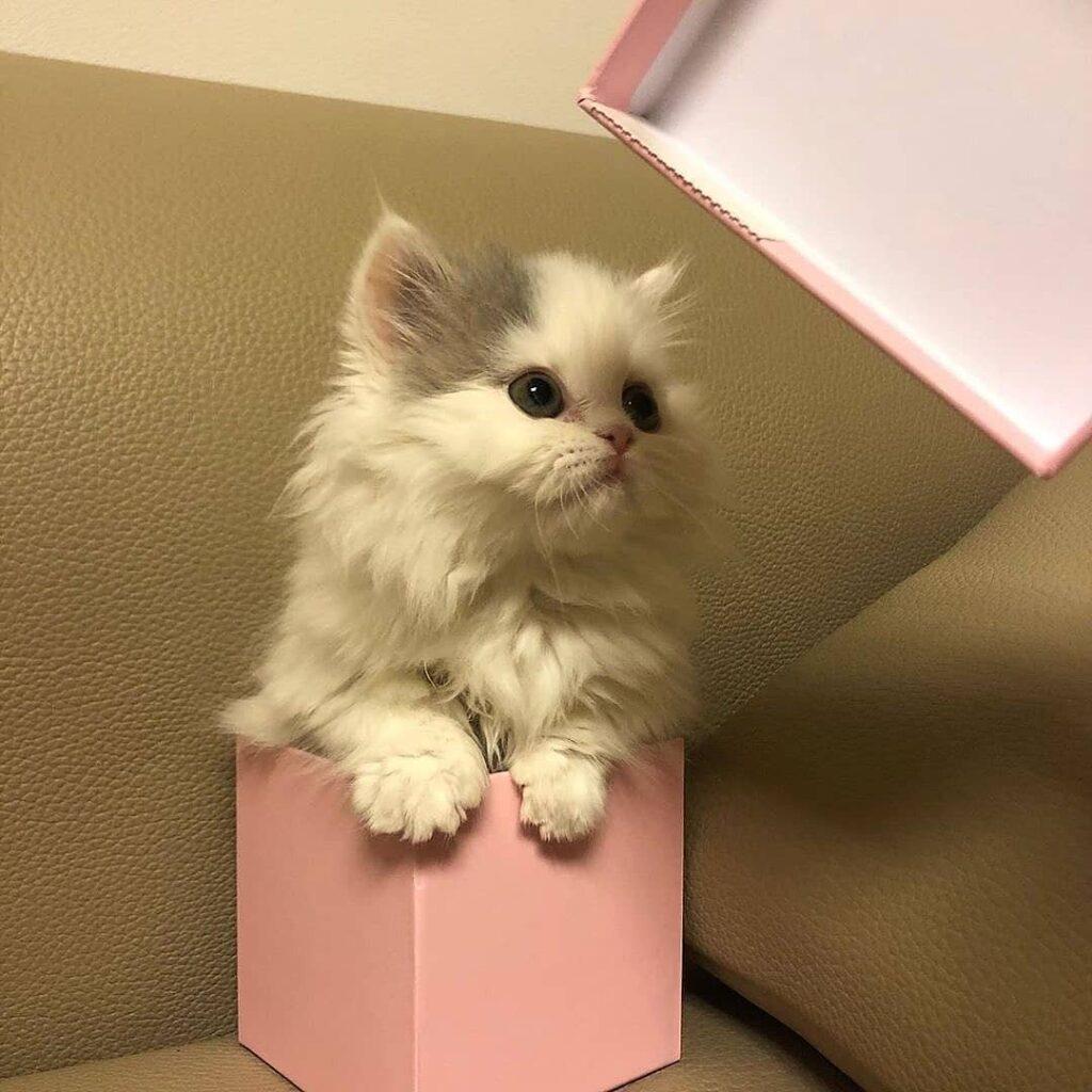 عکس پروفایل گربه