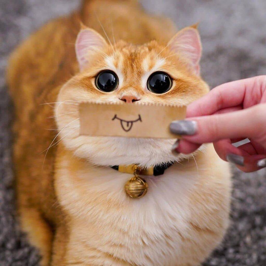 عکس بازه گربه