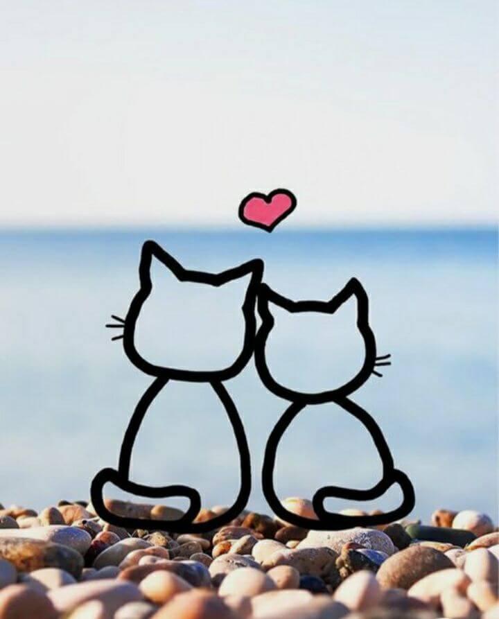 عکس پروفایل گربه عاشقانه
