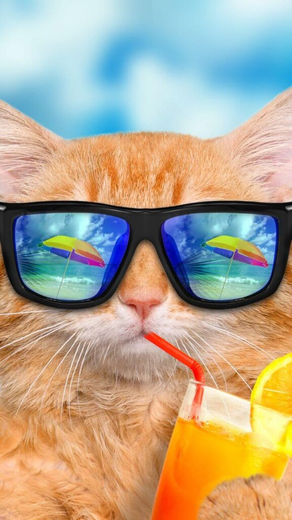 عکس لاکچری گربه