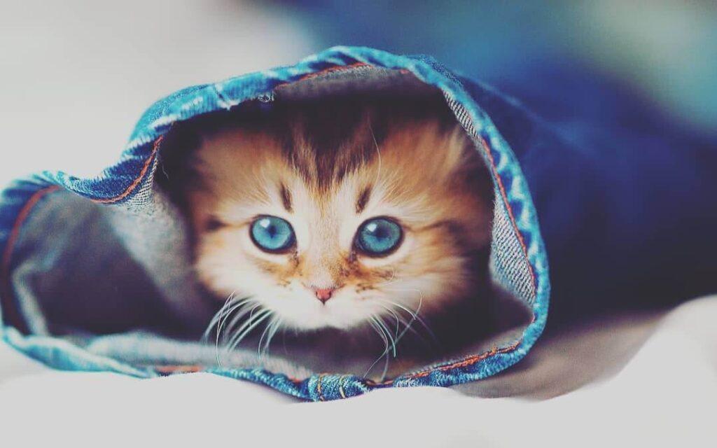 عکس پروفایل گربه جدید