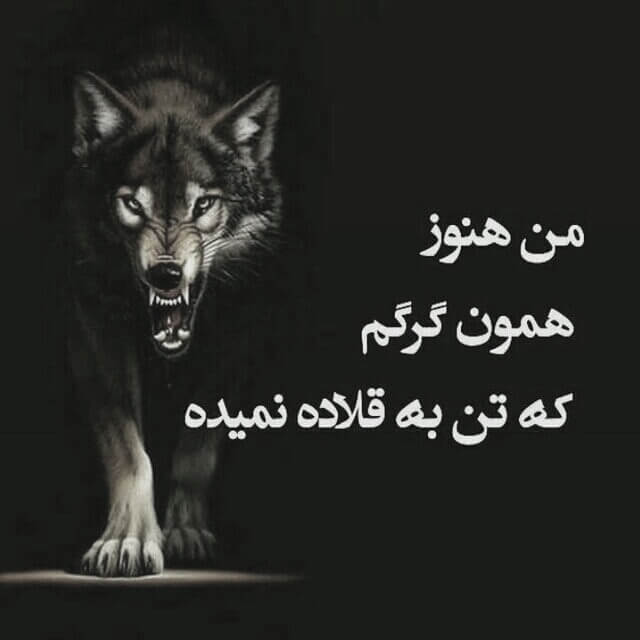 عکس نوشته سیاه و سفید گرگ