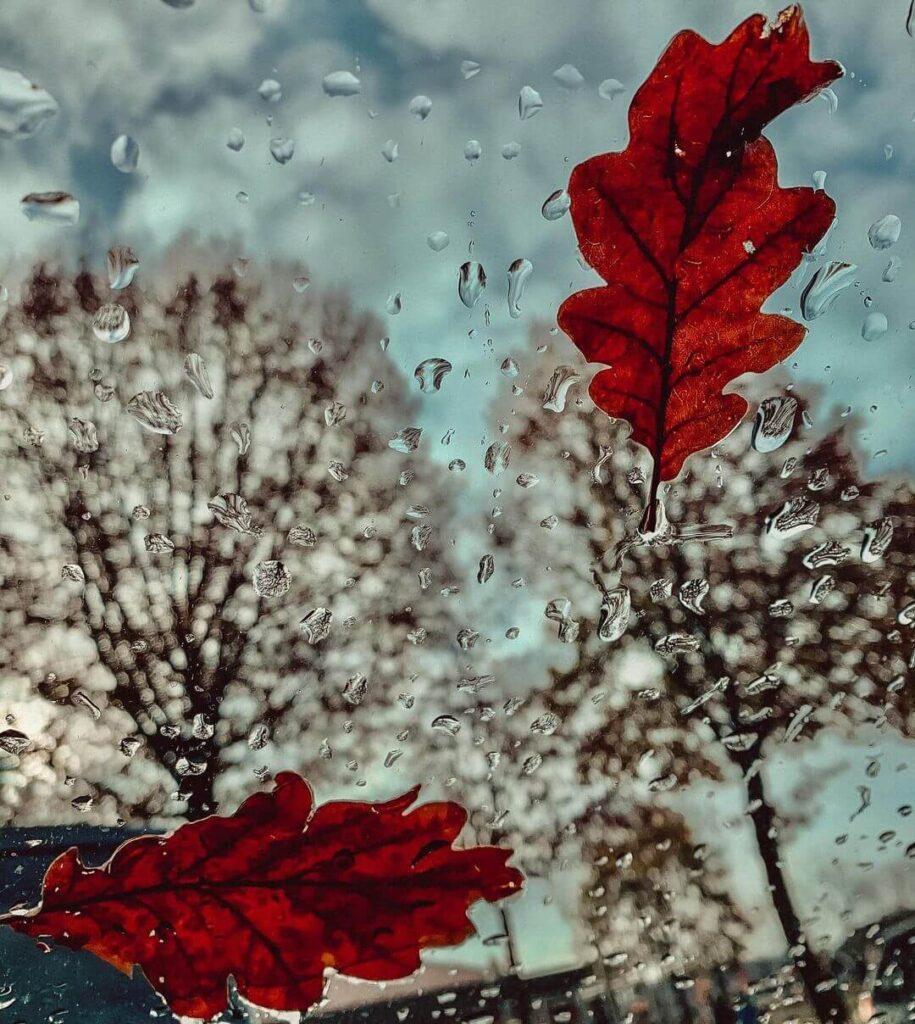 عکس پروفایل بارانی زمستان