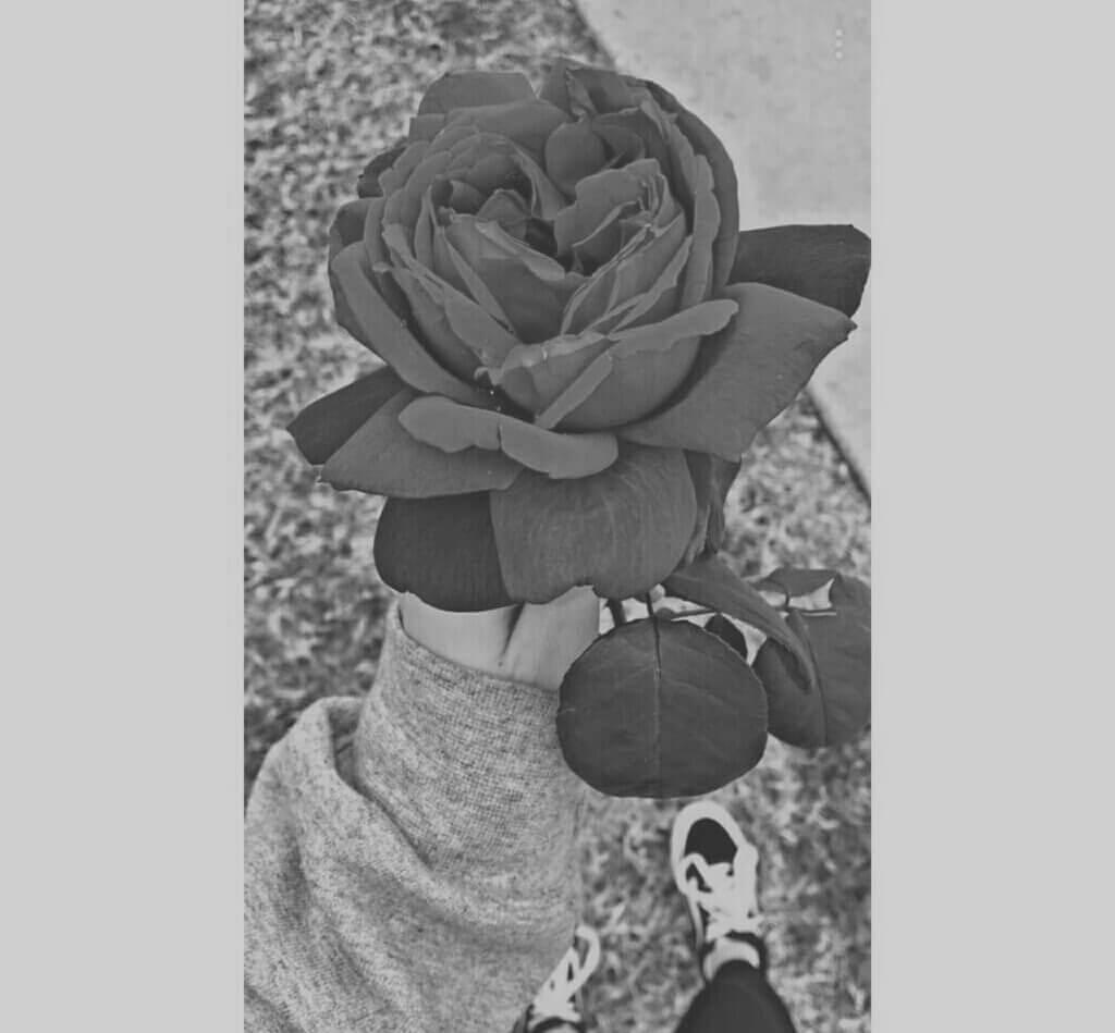 عکس پروفایل سیاه و سفید گل