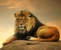 عکس پروفایل شیر سلطان جنگل