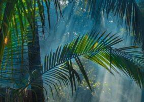 والپیپر و تصویر زمینه طبیعت سبز برای گوشی