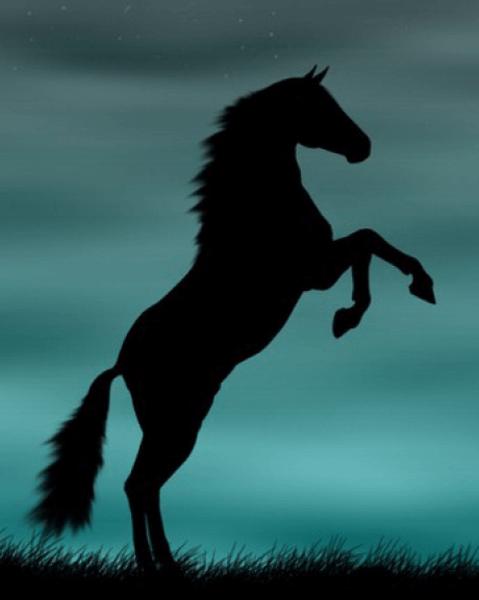 عکس اسب سیاه و زیبا