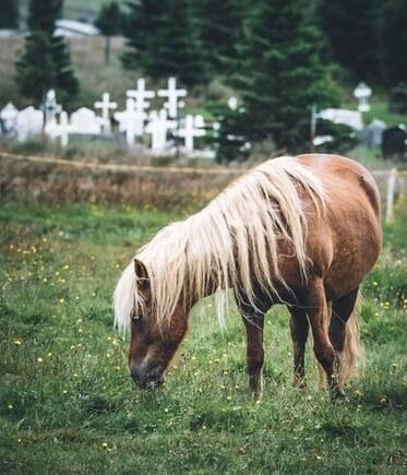 دانلود عکس اسب برای پروفایل