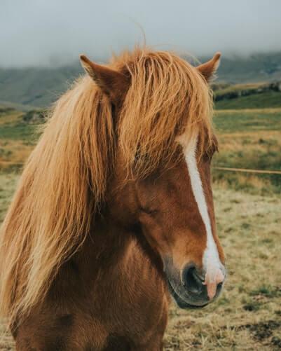 عکس اسب برای پروفایل