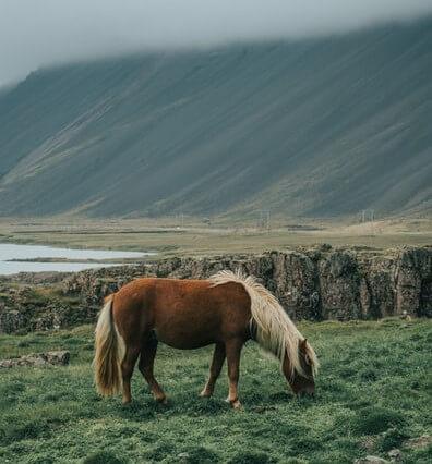 عکس پس زمینه اسب