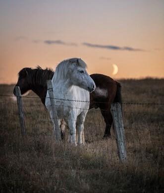 پروفایل اسب سفید