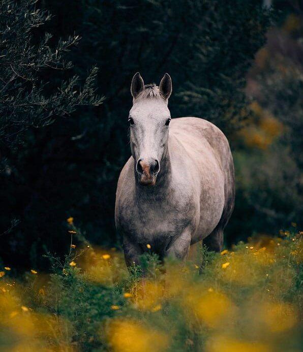 عکس پرفایل اسب سفید