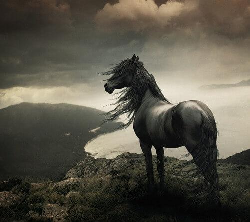 عکس پرفایل اسب دانلود