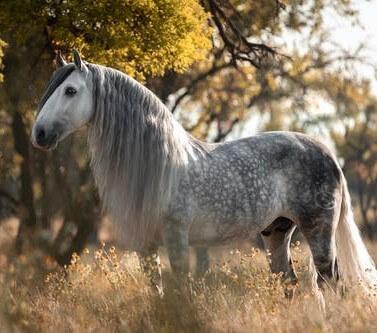 دانلود عکس پروفایل اسب