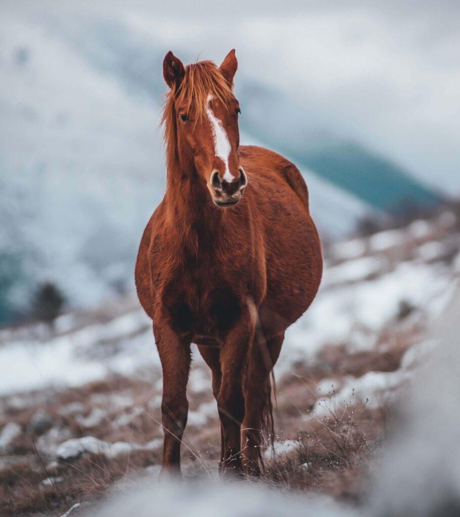 عکس اسب جدید برای پروفایل
