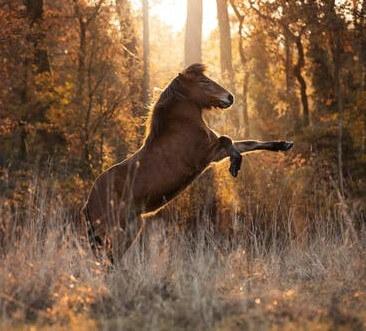 عکس اسب قهوی