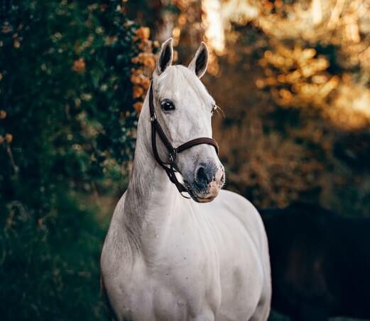 دانلود عکس اسب سفید