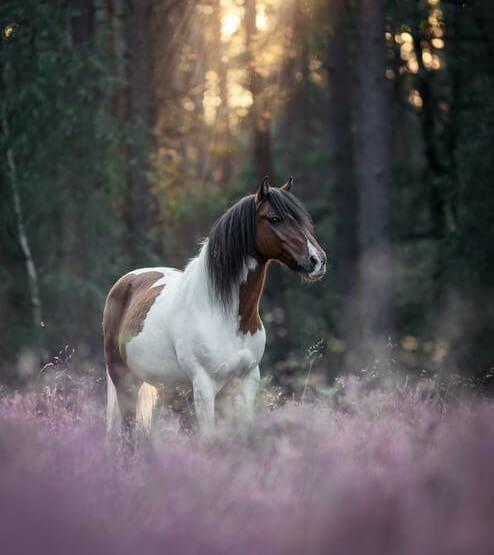 عکس اسب سفید و زیبا