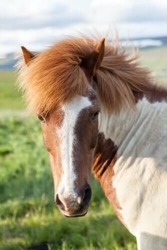 عکس پروفایل اسب