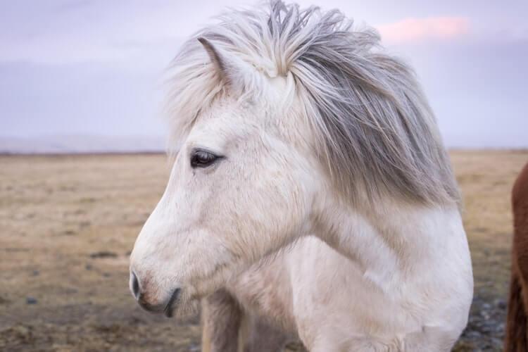 دانلود عکس پروفایل اسب با کیفیت عالی
